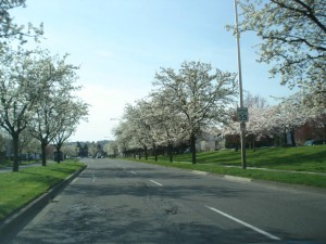 cherry tree aisle